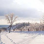 Winter At Scarborough Bluffs Art Print