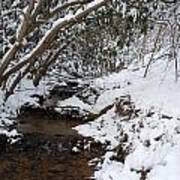 Winter At The Creek Art Print