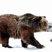 Winter Bear Walk Art Print