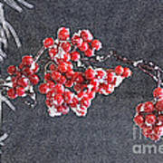 Winter Berries II Art Print