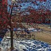 Winter Berries Art Print by Baywest Imaging