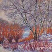 Winter Birches And Red Willows 1 Art Print