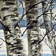 Winter Birches Art Print