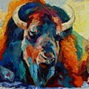 Winter Bison Art Print