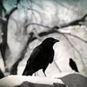 Winter Blackbirds Art Print