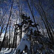 Winter Blue Art Print by Karol Livote