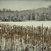 Winter By The Pond Art Print