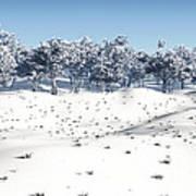 Winter Coppice Art Print