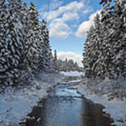 Winter Creek Art Print by Fran Riley