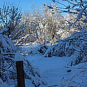 Winter Day II Art Print
