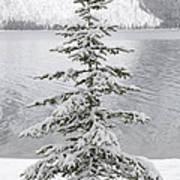 Winter Decor Art Print