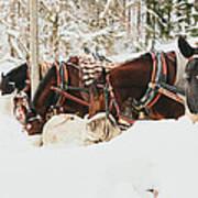 Horses Eating In Snow Art Print