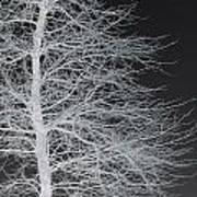 Winter Etching Art Print