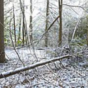 Winter Fallen Tree Art Print