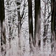 Winter Forest 1 Art Print