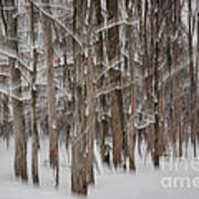 Winter Forest Abstract II Art Print