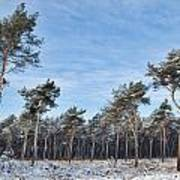 Winter Forest Covered With Snow Art Print