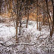 Winter Forest Print by Elena Elisseeva