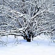Winter Fresh Art Print