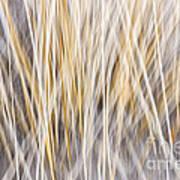 Winter Grass Abstract Art Print