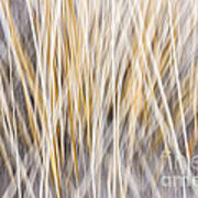 Winter Grass Abstract Art Print by Elena Elisseeva