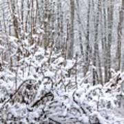 Winter Haven 2 Art Print