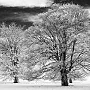 Winter Horse Chestnut Trees Monochrome Art Print