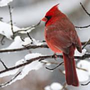 Winter In Red Art Print