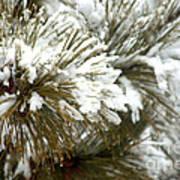 Winter In The Heartland 10 Art Print