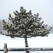 Winter In The Heartland 11 Art Print