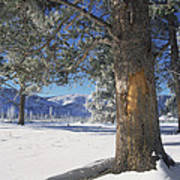 Winter In Yellowstone National Park Art Print