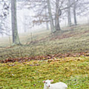 Winter Lamb Foggy Day Art Print
