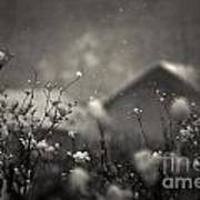 Winter Landscape With Snow Falling And Plants Art Print