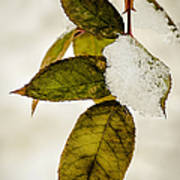 Winter Leaves And Snow Art Print