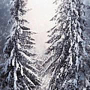 Winter Light And Tiger Art Print