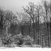 Winter Light Post Art Print
