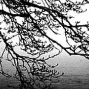 Winter Magnolia Art Print