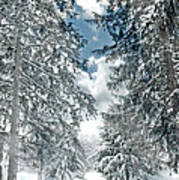 Winter Me Art Print