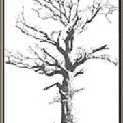 Winter Oak Art Art Print