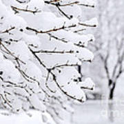 Winter Park Under Heavy Snow Art Print by Elena Elisseeva