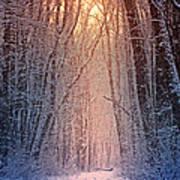 Winter Pathway Art Print