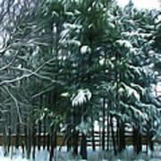 Winter Pine Tree  Art Print