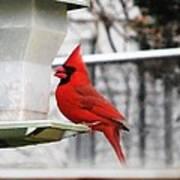 Winter Red Bird Art Print