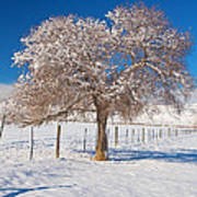Winter Season On The Plains Portrait Art Print