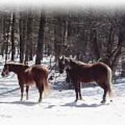 Winter Shadow Horses Art Print
