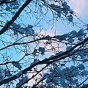 Winter Sky And Snowy Japanese Maple Art Print