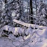 Winter Solemn Art Print