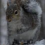 Winter Squirrel 1 Art Print