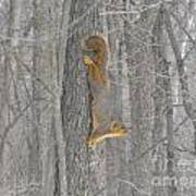 Winter Squirrel Art Print