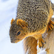 Winter Squirrel Art Print
